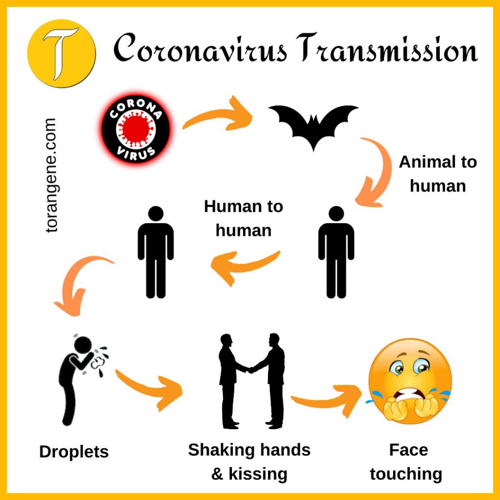 transmission of coronavirus